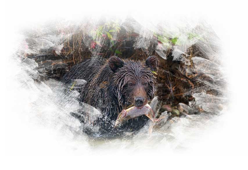 Oso Grizzly - viaje fotográfico Canadá Oeste. Pablo Alberto Delgado