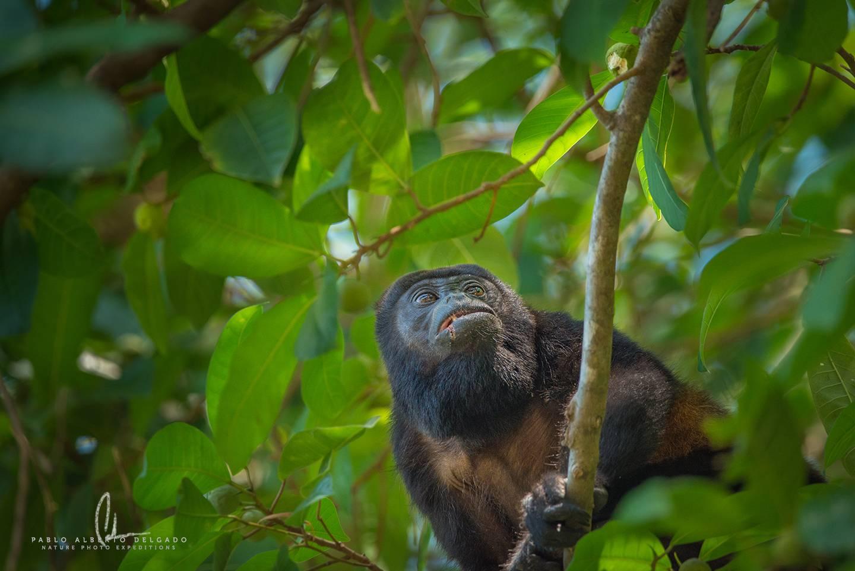 Fotografía de naturaleza en Costa Rica