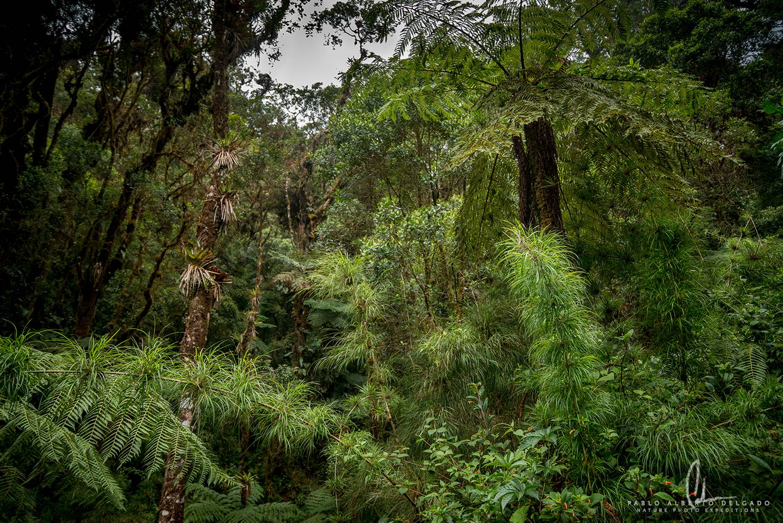 Bosque húmedo en Costa Rica