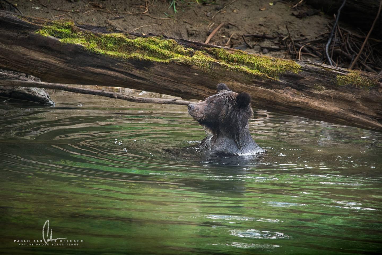 Grizzly bear photo trip