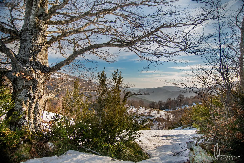 Fotografía de naturaleza en los Pirineos